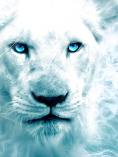 Alone Rainbow White Lion